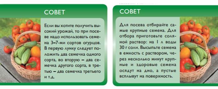 Советы для выращивания огурцов