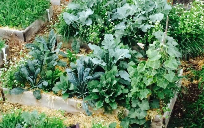 мульча для овощей