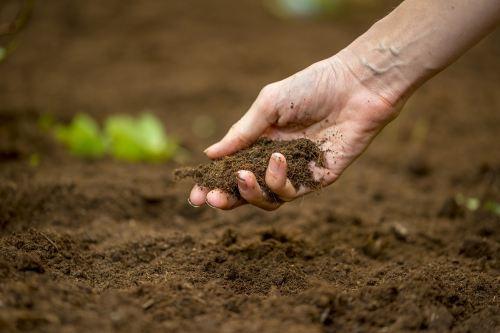 Природное земледелие способствует оздоровлению почвы